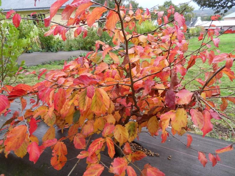 couleurs d'automne Sdc19134