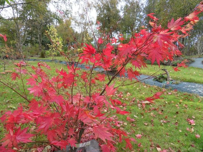 couleurs d'automne Sdc19135