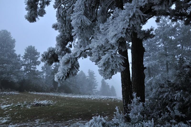 hiver 2011 / 2012 Gelaes12