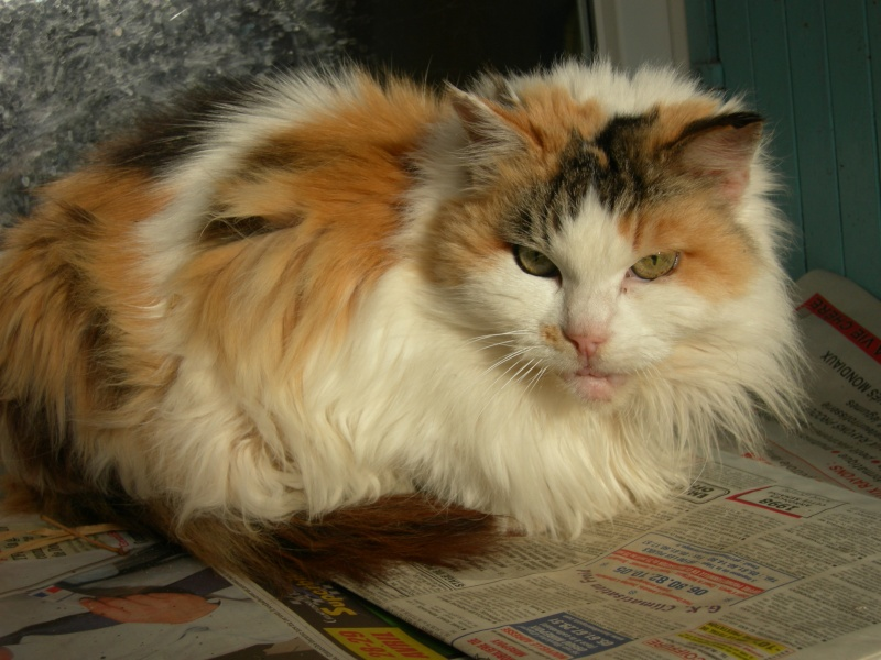 Clarisse, 16 ans Claris13