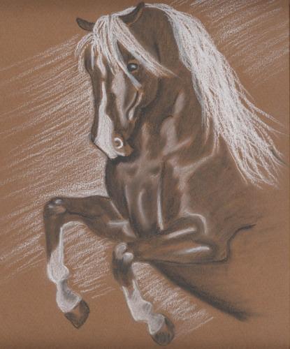 Belle cabrade Cheval10