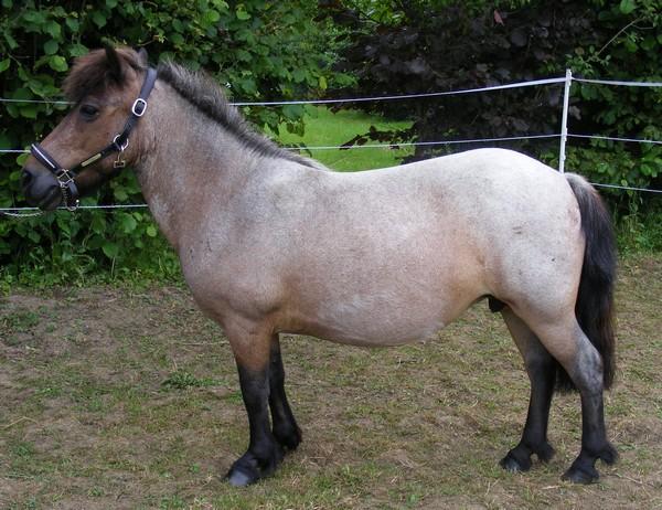 DAISY - Ponette ONC née en 1999 - adoptée en novembre 2012 par Loulouty88 911