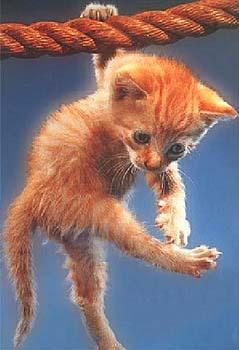 L'énigme des chats ! Acroba10