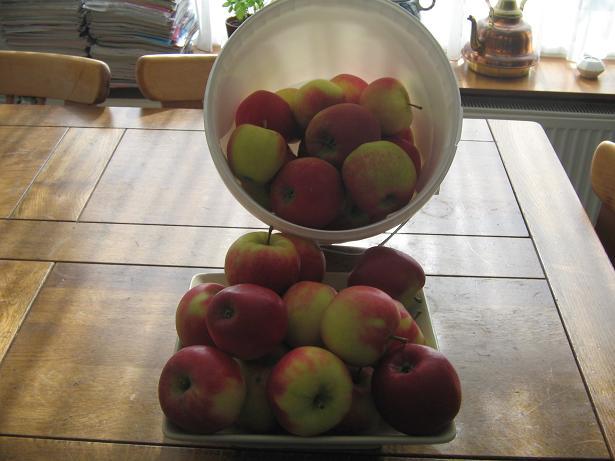 Un seau de pommes Mestir43