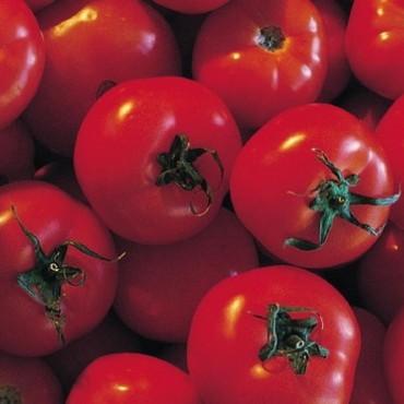 Astuce cuisine : ne jamais conserver les tomates au réfrigérateur Tomate10
