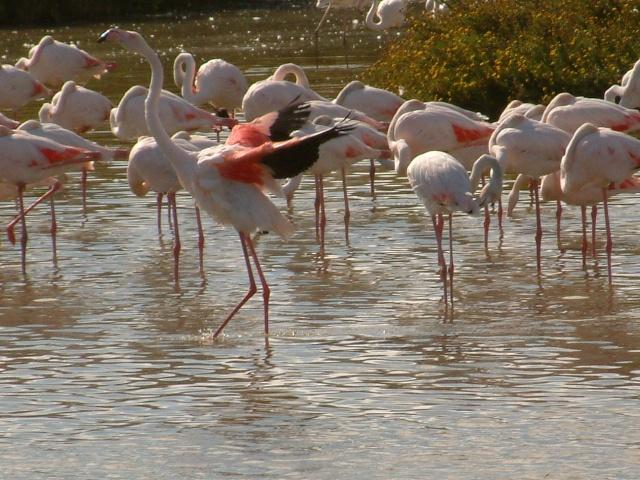 Animaux, oiseaux... etc. tout simplement ! Dscf0110