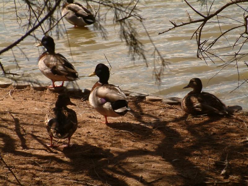 Animaux, oiseaux... etc. tout simplement ! - Page 3 Dscf0111