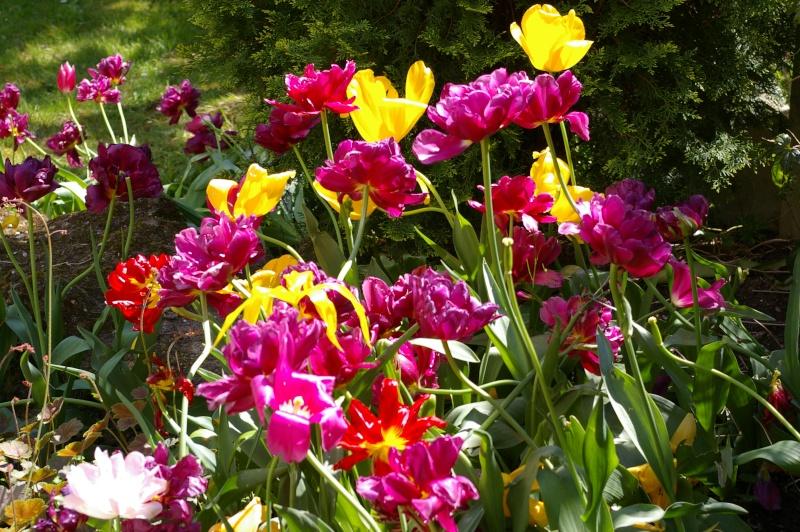 Fleurs ... tout simplement - Page 5 Eaubon10
