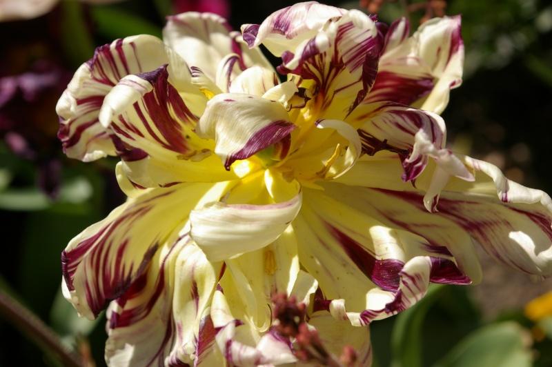 Fleurs ... tout simplement - Page 5 Eaubon12