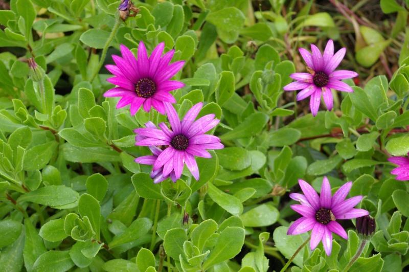 Fleurs ... tout simplement - Page 6 Mars_219