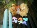 [SWEETIE PUPS & KITTIES] Mes sweetie pups and kitties Chiens12