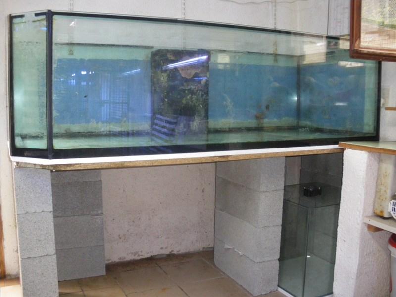 Evolution du nouveau bac du locarium (900 litres) 07_08_10