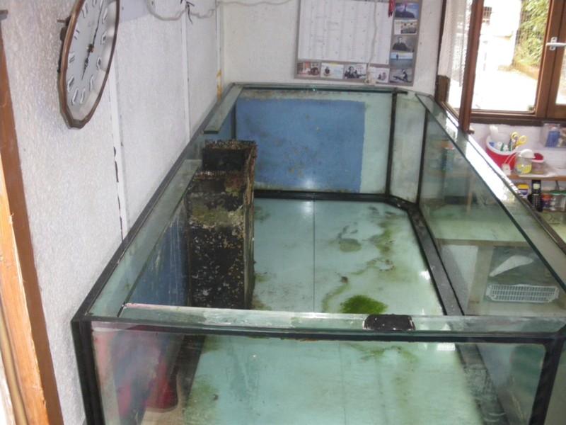 Evolution du nouveau bac du locarium (900 litres) 07_08_11