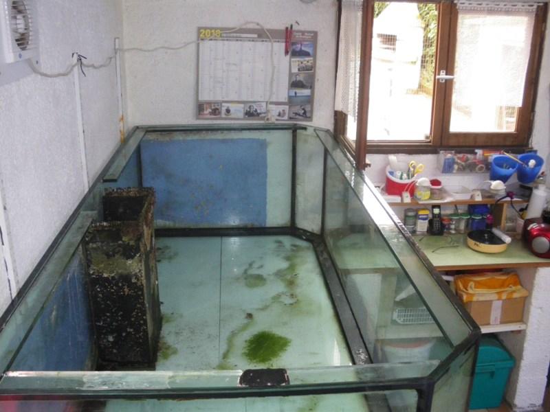 Evolution du nouveau bac du locarium (900 litres) 07_08_12