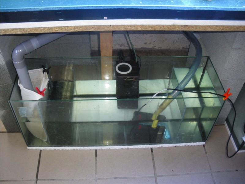 Evolution du nouveau bac du locarium (900 litres) 07sept11