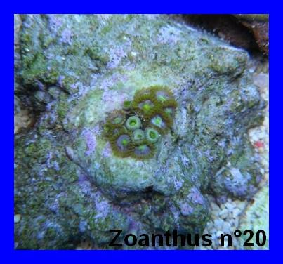 Mes Zoanthus 2013