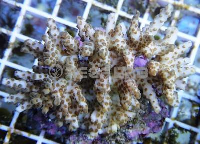 Arrivage coraux reeflab 312