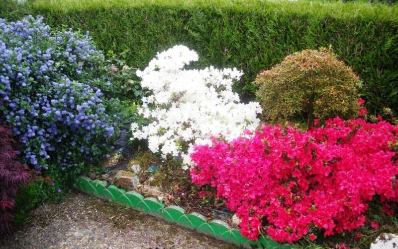 C'est le printemps Bleubl10