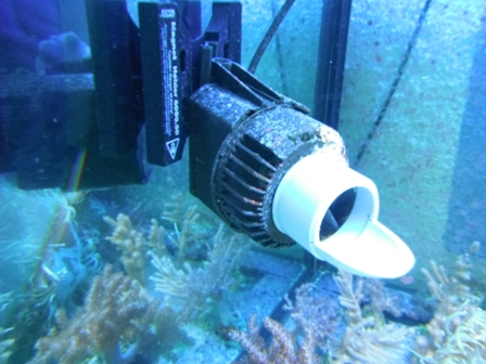 Evolution du nouveau bac du locarium (900 litres) Dscf0224