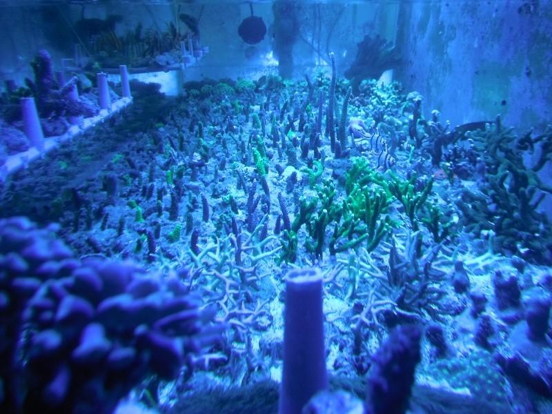 Photos du soir sous tubes bleus Dscf0415