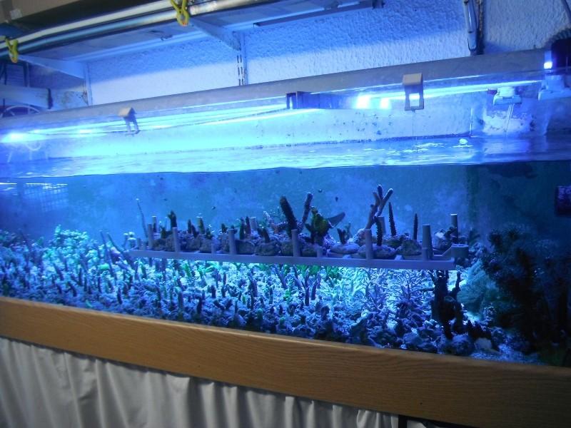 Photos du soir sous tubes bleus Dscf0418
