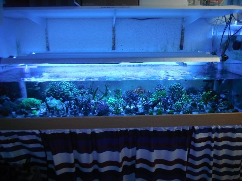 Photos du soir sous tubes bleus Dscf0420