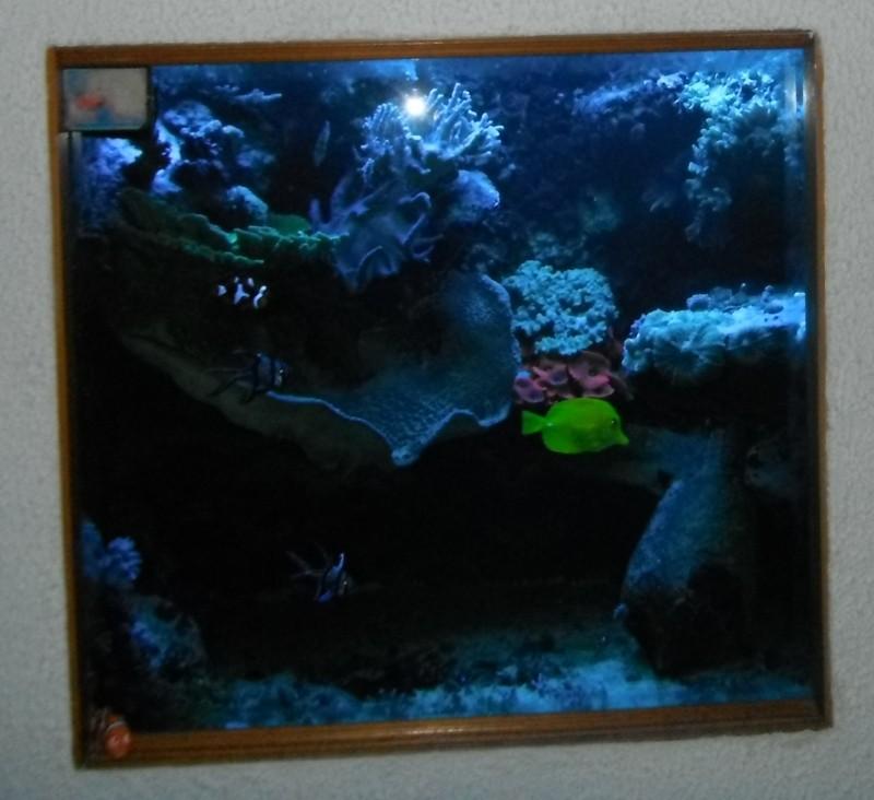 Photos du soir sous tubes bleus Dscf0510