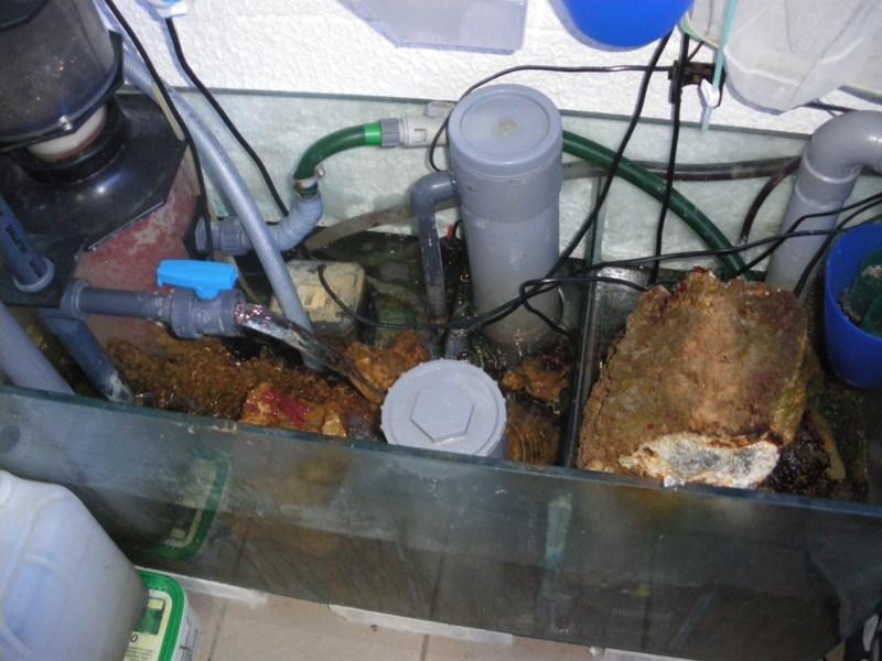 Elagage dans le 1500 litres Imgp0724