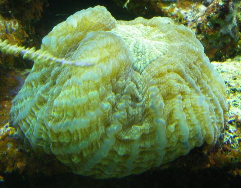 Photos bac du Frangin (Typus) à Quimper Imgp8114