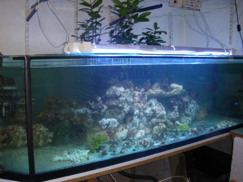 Evolution du nouveau bac du locarium (900 litres) Imgp8619