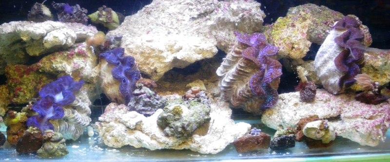 Photos bourse Sallertaine (section eau de mer) Imgp9421