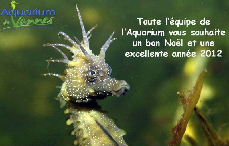 Aquarium de Vannes Toute_10