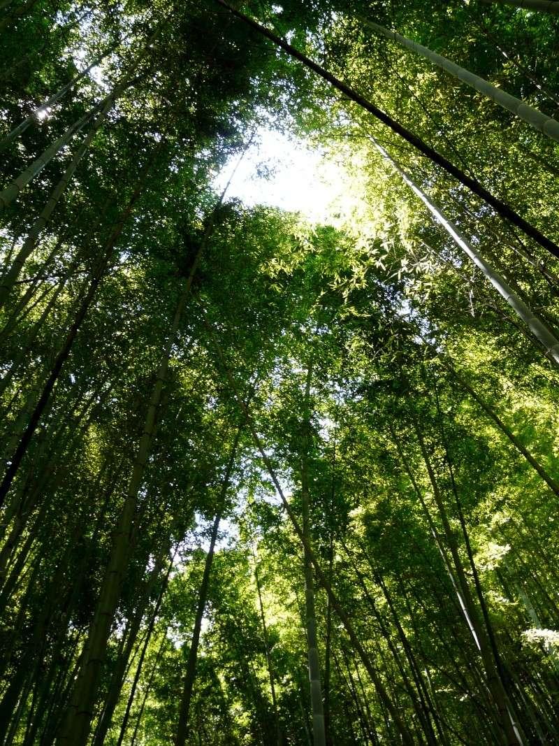 Un peu de ciel et d'air.... Bambou10