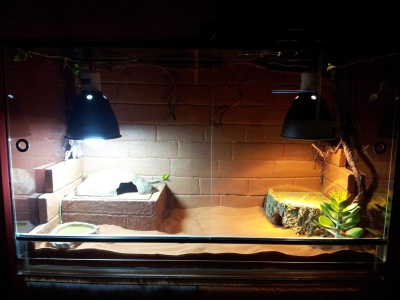 terra pour gecko 20120511