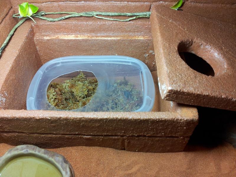 terra pour gecko 20120512