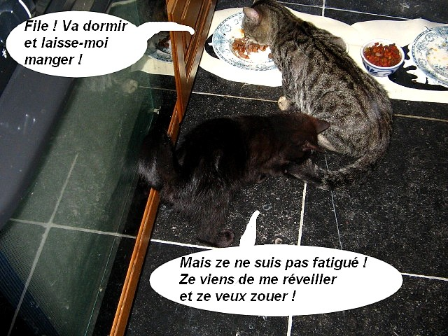 Le petit Charbon Charbo22