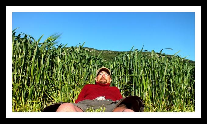 l'avis d'expert pour mon blé de débutant - Page 2 Sans_t10