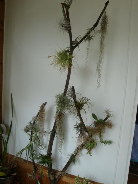 Armoire plantes épiphytes (Orchidées et Tillandsias) Jardin24