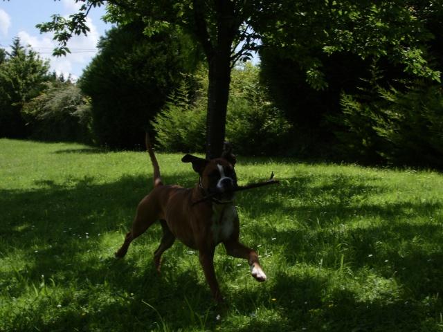 quelques nouvelles de Chelsy adoptée venue de La louvière Photo_78