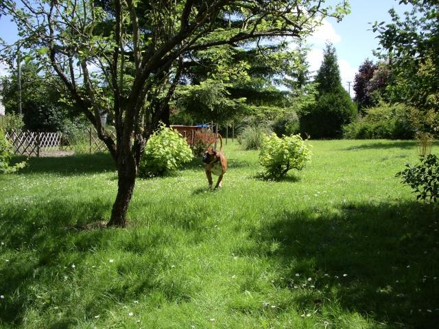 quelques nouvelles de Chelsy adoptée venue de La louvière Photo_83