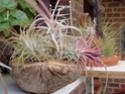 Floraisons 2012 P6130612