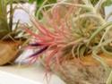 Floraisons 2012 P6140610