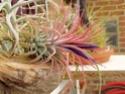 Floraisons 2012 P6140612