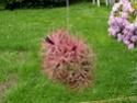Floraisons 2012 P7150613