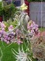Floraisons 2012 P7150619
