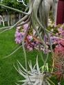 Floraisons 2012 P7150620