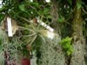 Floraisons 2012 P7230010