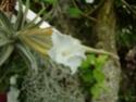 Floraisons 2012 P7230011