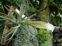Floraisons 2012 P7230012