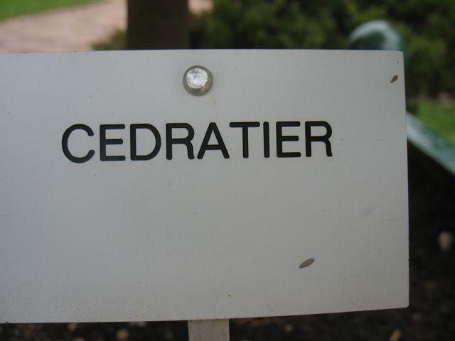 Cédratier 250_an28
